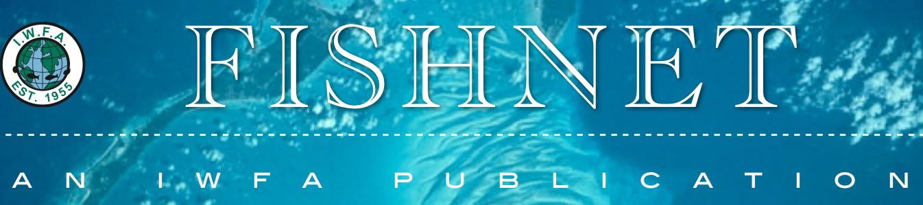 Fishnet Newsletter Header